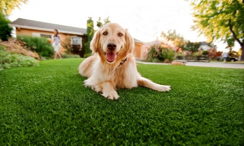 artificial-grass-pet-areas