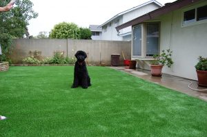 North Bay Terraces Artificial Turf Landscape Installer in 92114