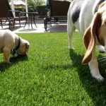 Synthetic Pet Turf Company San Diego, Artificial Pet Grass Backyard Installation