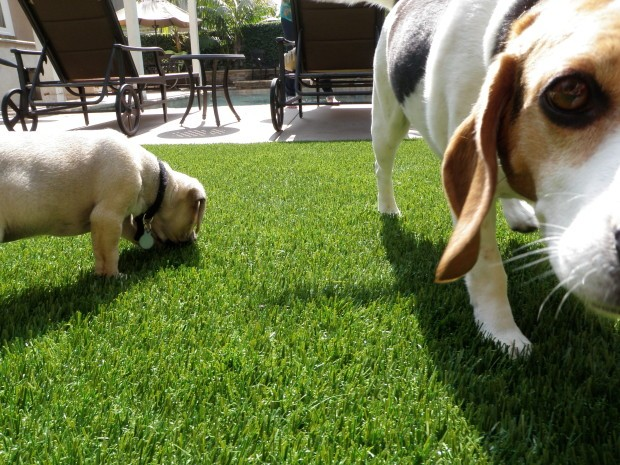 Synthetic Pet Turf Company San Diego, Artificial Pet Grass Backyard Installation