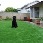 Synthetic Lawn Pet Landscapes San Diego, Top Rated Artificial Grass Installation for dogs