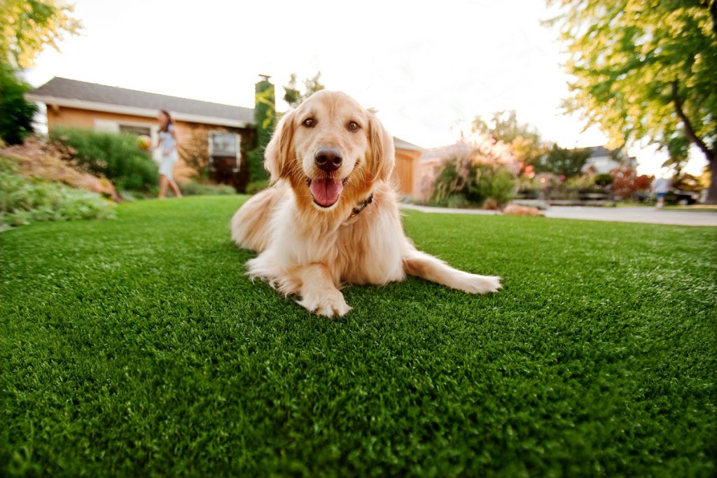 Synthetic Grass For Dogs San Diego, Artificial Lawn Dog Run Installation