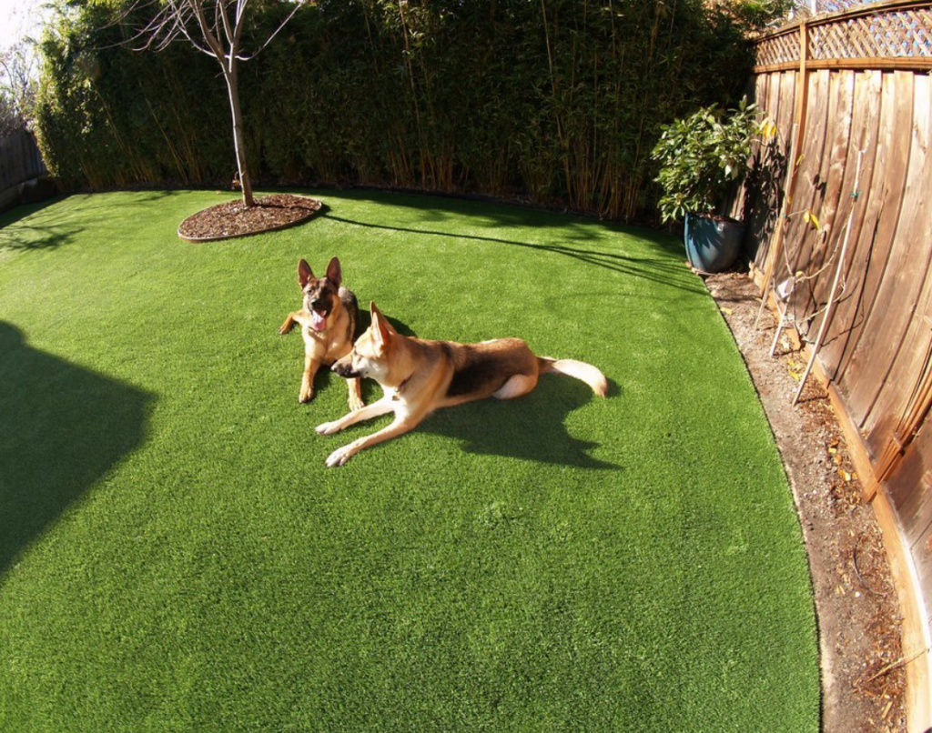 Artificial Turf vs. Natural Grass For Pets San Diego