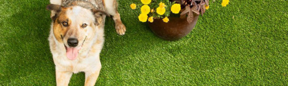 ▷🥇Protect Your Dog's Coat with Realistic Artificial Grass San Diego