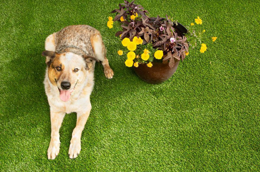 Protect Your Dog's Coat with Realistic Artificial Grass San Diego