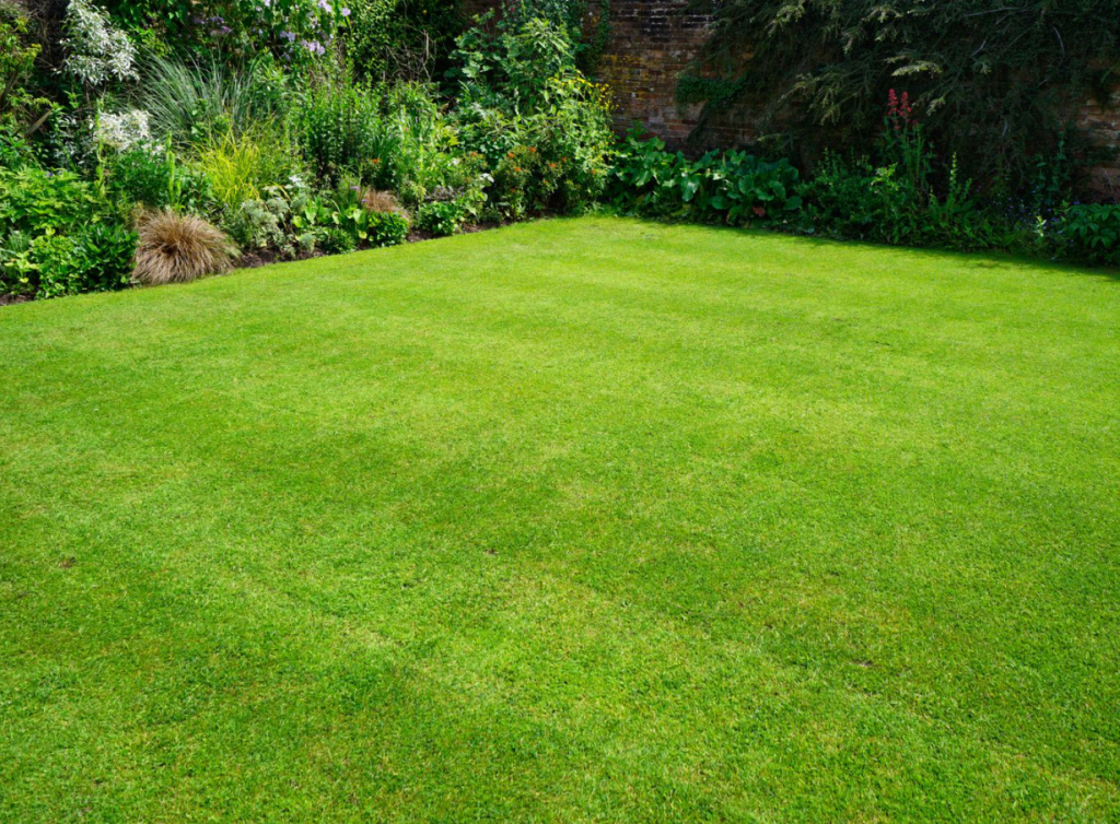 3 Ways To Solve Exasperating Lawn Issues for Good In San Diego