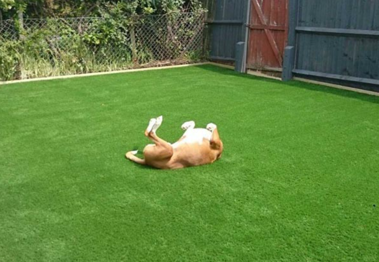 Artificial Grass For Pets San Diego