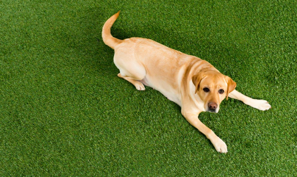 Synthetic Turf For Pets San Diego