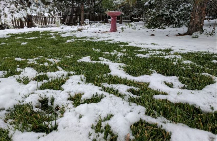 How to Care for Your Artificial Turf in Winter Weather