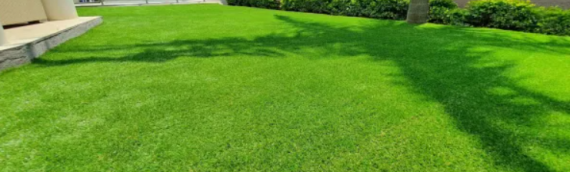 ▷Secrets About Maintaining the Perfect Lawn In San Diego