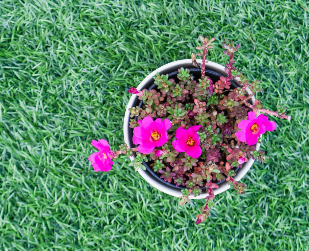 Integrate Flowers With The Best Artificial Grass In San Diego
