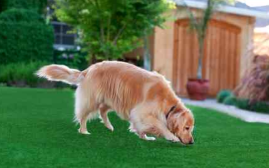 Keeping Artificial Grass Clean In San Diego With Pets