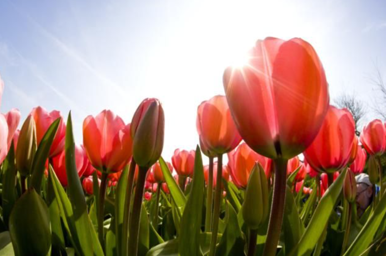 Artificial Grass Can Help You Celebrate Spring In San Diego