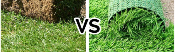 ▷Artificial Grass For Dogs In San Diego, CA Versus Natural Grass