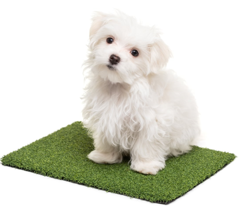 Artificial Turf For Dogs Solves Problem In San Diego