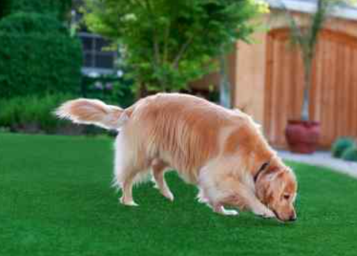 Why An Artificial Turf Is Better Than Natural Grass For Your Pets In San Diego?