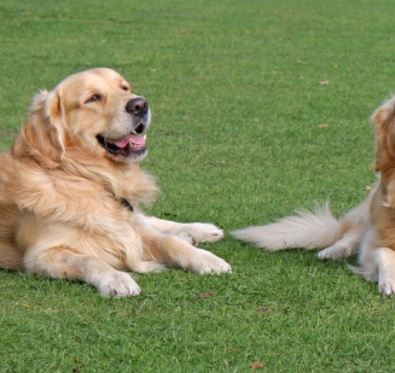 Pet Owners Love Artificial Grass Pros For Dogs In San Diego